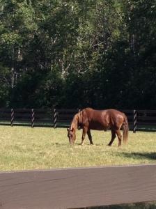 BEARthehorse.