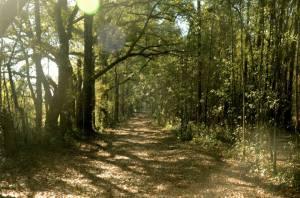 Trailride