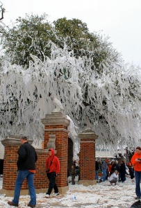 Toomers2