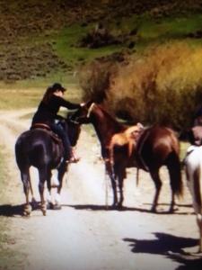 Julie's Horses